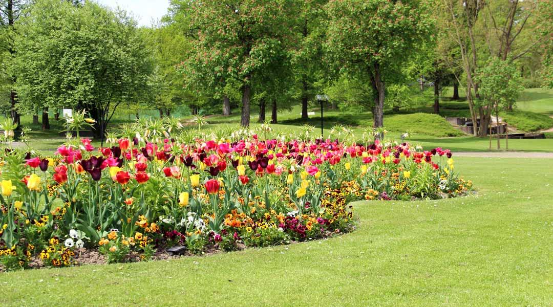 Frühling Tulpenbeet an der Park Klinik