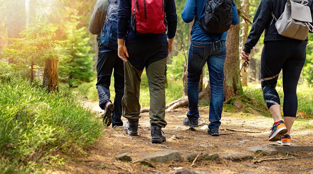 Eine Wanderung im Wald in der Sporttherapie
