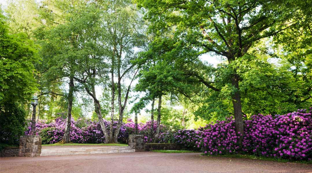 Weg mit Bäumen und Rhododendron an der Park Klinik