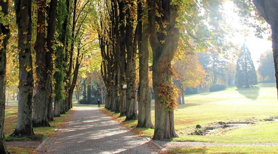 Zufahrt mit Herbstbäumen zur Park Klinik
